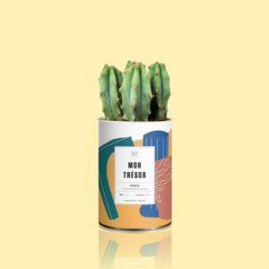 Cactus MON TRESOR by AŸ CACTUS