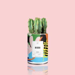 Cactus Bisou Blanc par Aÿ Cactus