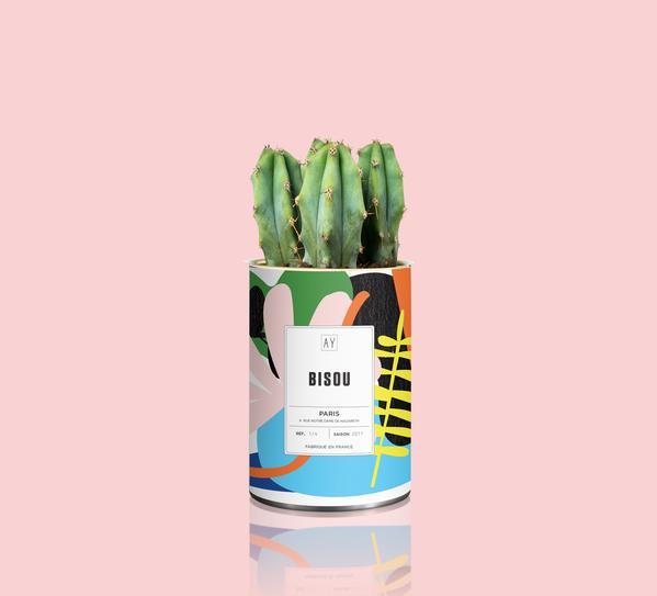 Cactus Bisou Blanc by AŸ CACTUS
